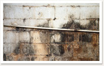 mould removal in toronto